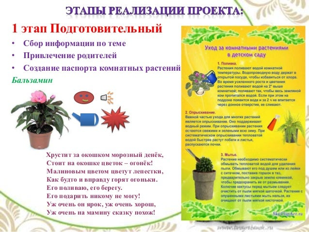 растений Бальзамин Хрустит