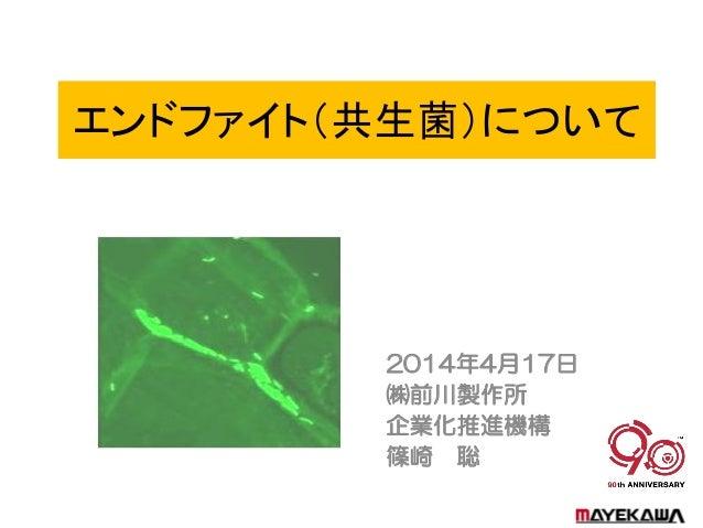 エンドファイト(共生菌)について 2014年4月17日 ㈱前川製作所 企業化推進機構 篠崎 聡