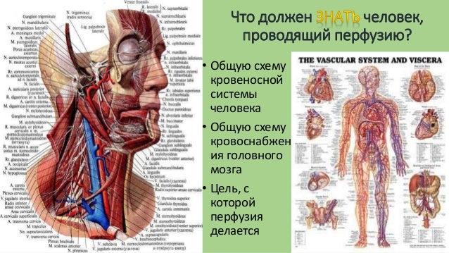 Общую схему кровеносной