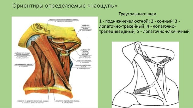 Neck movements anatomy