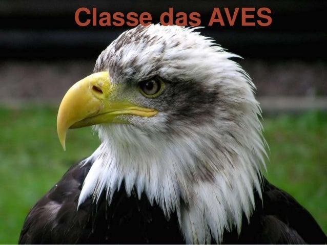 Classe das AVES  Classe das Aves  CLASSE DAS AVES