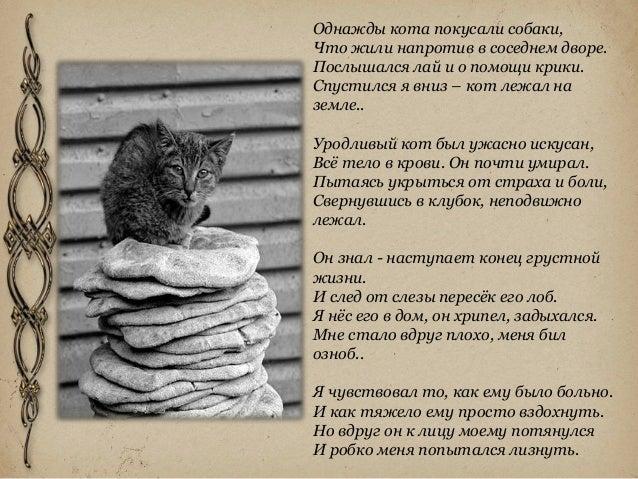 Уродливый кот стих текст автор