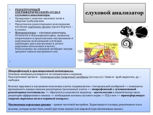 слухового анализатора • 1