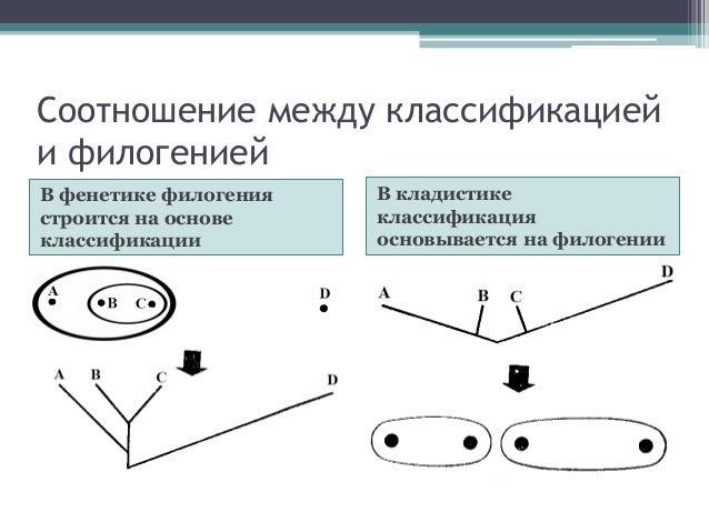 систематических групп