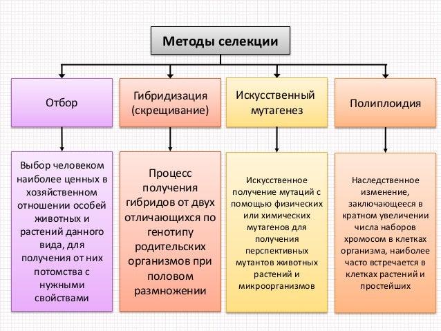 Методы селекции Отбор