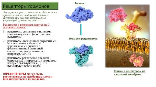 Связано с гормоном тестостероном
