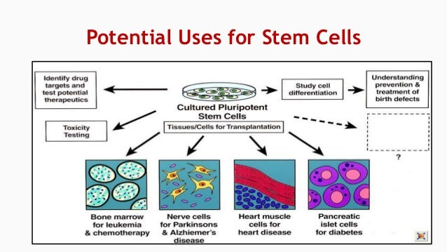 How should I finish my paper on stem cell research?