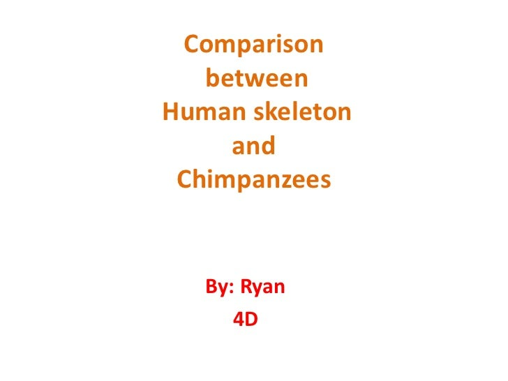 Comparison of Human and Chimpanzee Skeletons
