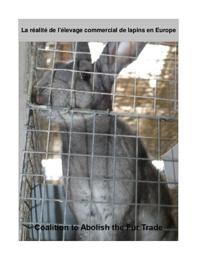 La réalité de l'élevage commercial de lapins en Europe