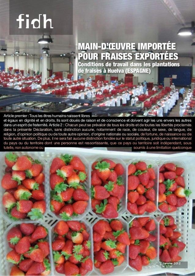Main-d'œuvre importée pour fraises exportées Conditions de travail dans les plantations de fraises à Huelva (ESPAGNE) Arti...