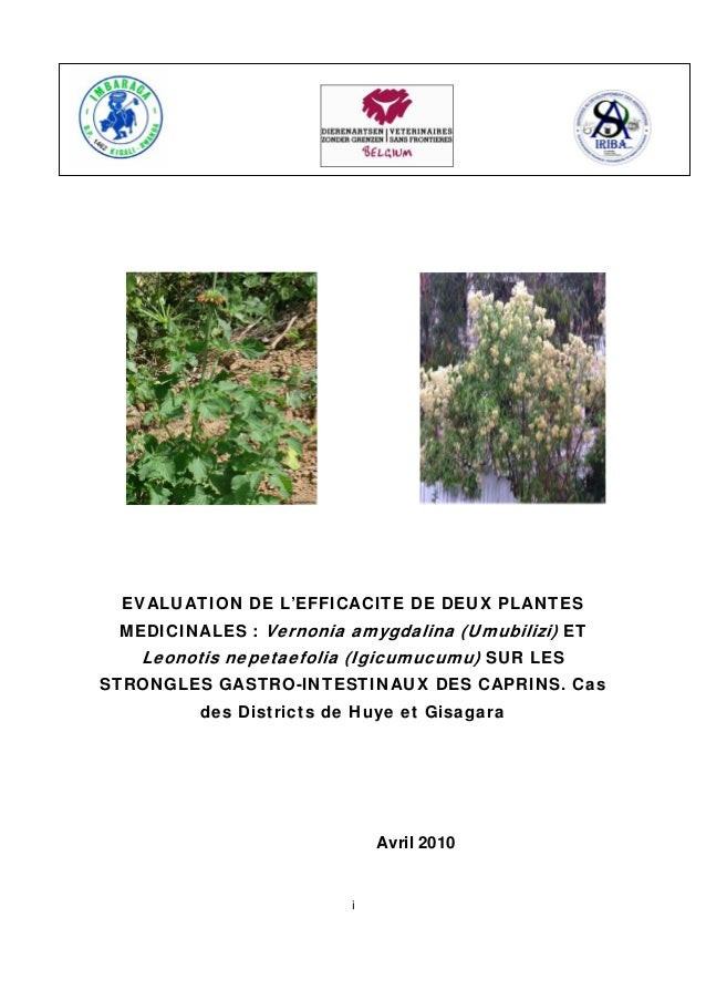 Evaluation de l Efficacite deux Plantes Medicinales: Vernonia Amygdalina (Umubilizi) et Leonotis Nepetaefolia (Igicumucumu) sur Les Strongles Gastro-Intestinaux Des Caprins. Cas des Districts de Huye et Gisagara