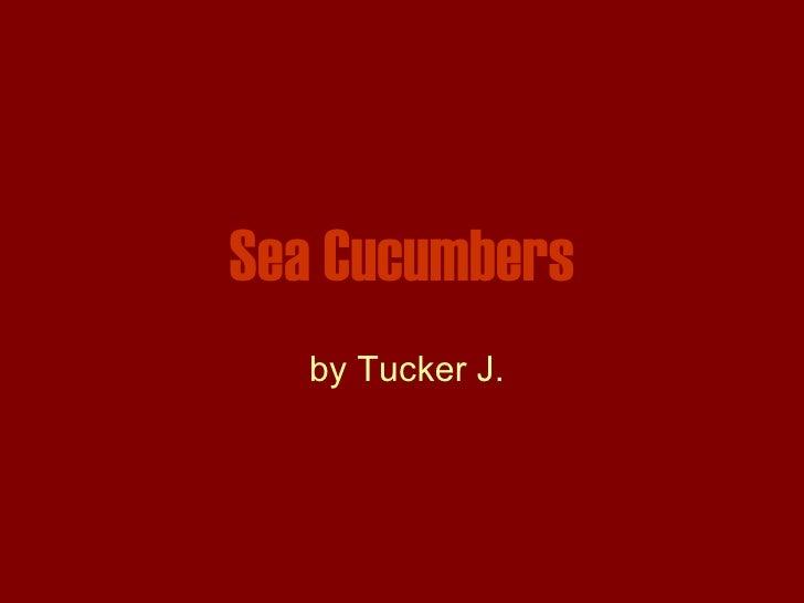 Sea Cucumbers by Tucker J.