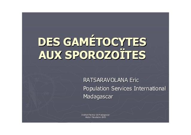 """Institut Pasteur de MadagascarAtelier Paludisme 2005VECTEURVECTEUR!! """""""" # $!# $!"""""""" %% & !  !& (& !  !& (! !  # (  # ("""