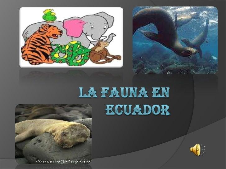  LA FAUNA EN EL ECUADOR ANIMALES DE LAS 4 REGIONES CONCEPTO DE FAUNA DEFINICION DE ANIMALES ANIMALES EN PELIGRO DE EX...