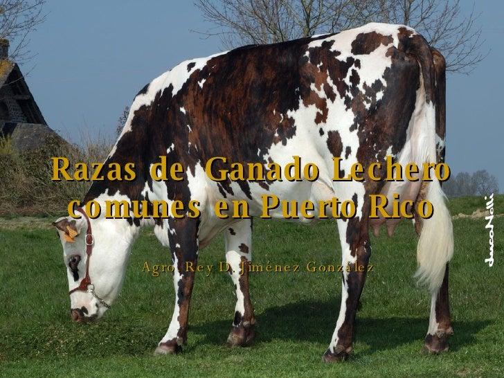 Razas de  Ganado Lechero comunes en Puerto Rico Agro. Rey D. Jiménez González