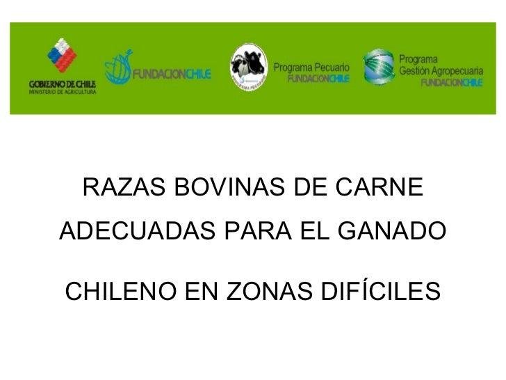 Razas de vacunos en Chile