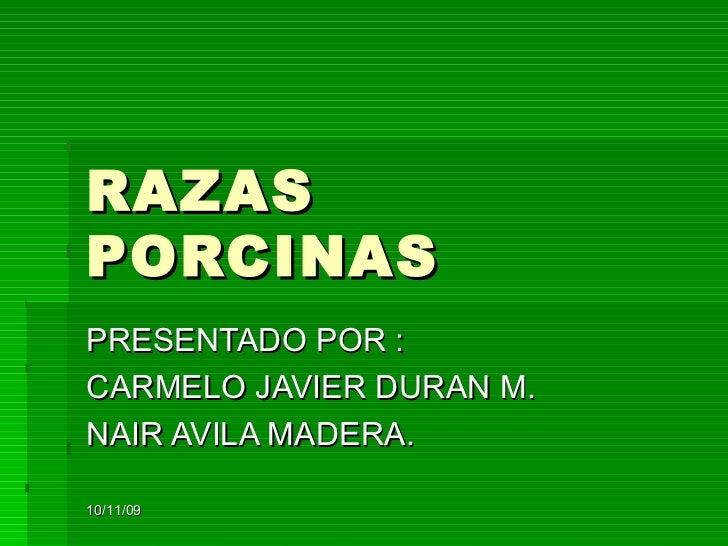 RAZAS PORCINAS PRESENTADO POR : CARMELO JAVIER DURAN M. NAIR AVILA MADERA. 10/11/09