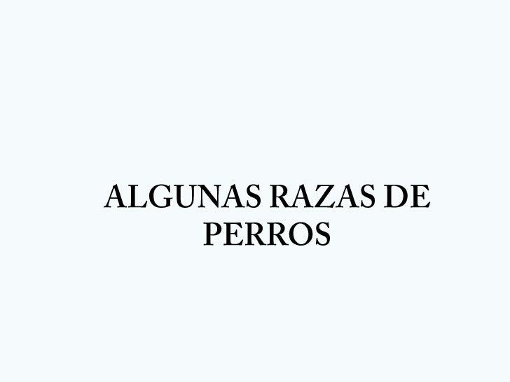 ALGUNAS RAZAS DE PERROS<br />