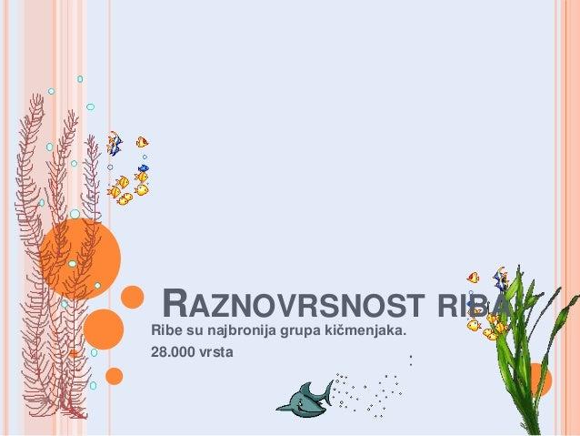 RAZNOVRSNOST RIBA  Ribe su najbronija grupa kičmenjaka. 28.000 vrsta
