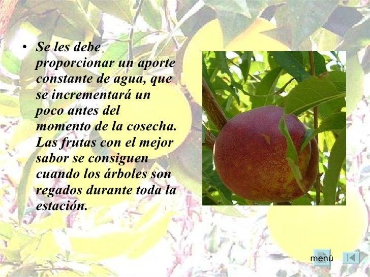 Rboles frutales for Cuando se podan los arboles frutales