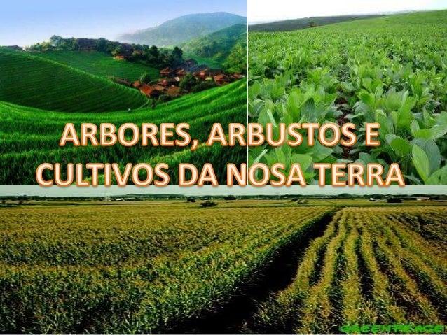 áRbores,arbustos e cultivos da nosa terra