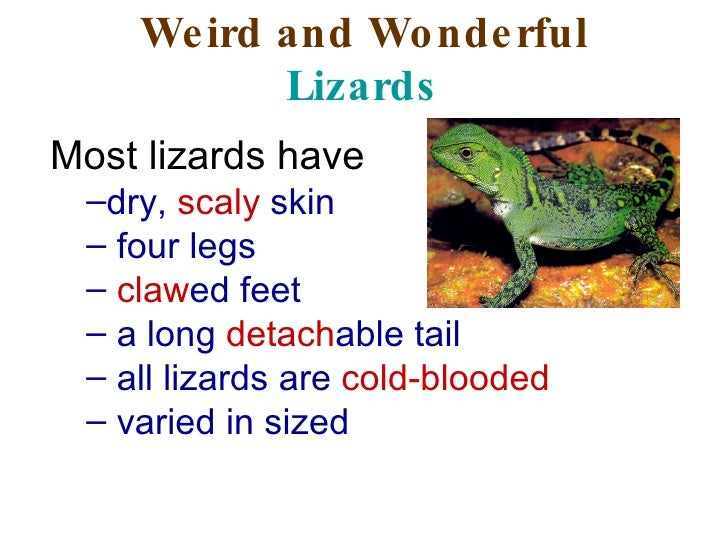 Weird and Wonderful  Lizards <ul><li>Most lizards have  </li></ul><ul><ul><li>dry,  scaly  skin  </li></ul></ul><ul><ul><l...