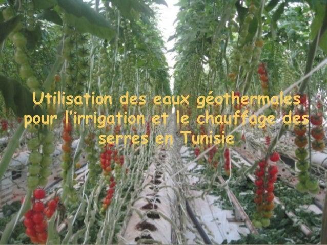 Utilisation des eaux géothermales pour l'irrigation et le chauffage des serres en Tunisie