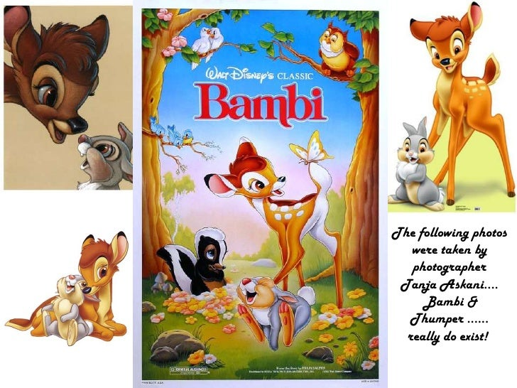 The following photos were taken by photographer <br />TanjaAskani.... Bambi &<br />Thumper ......<br />really do exist! <b...