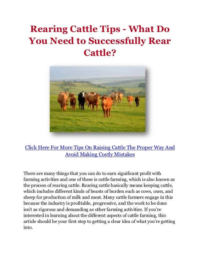 Rearing Cattle Tips - What Do  You Need to Successfully Rear             Cattle?Click Here For More Tips On Raising Cattle...