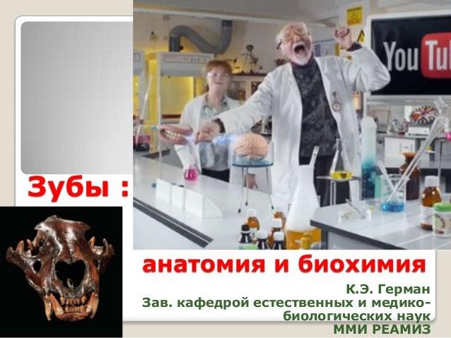 Зубы : анатомия и биохимия К.Э. Герман Зав. кафедрой естественных и медикобиологических наук ММИ РЕАМИЗ