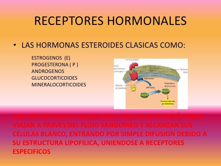 esteroides estructura y funcion