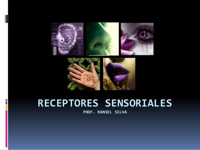 RECEPTORES SENSORIALES PROF. RANSEL SILVA