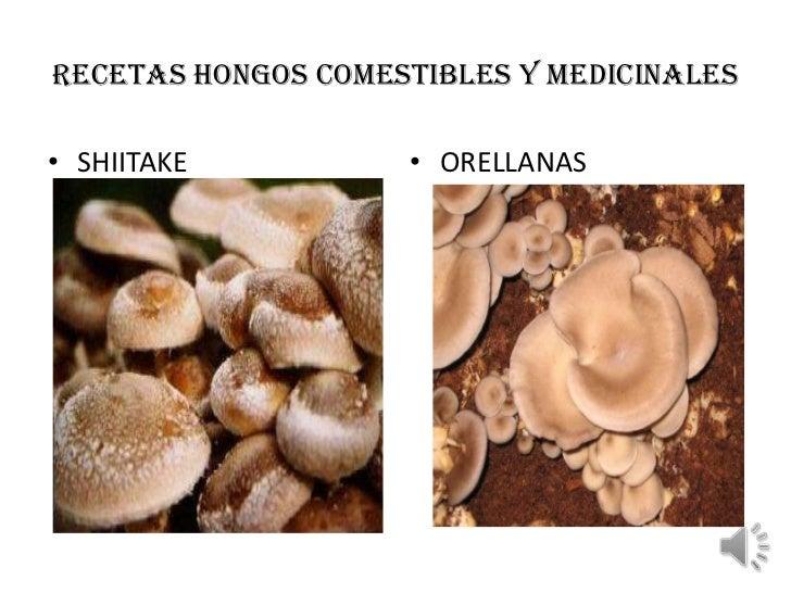 RECETAS HONGOS COMESTIBLES Y MEDICINALES• SHIITAKE          • ORELLANAS