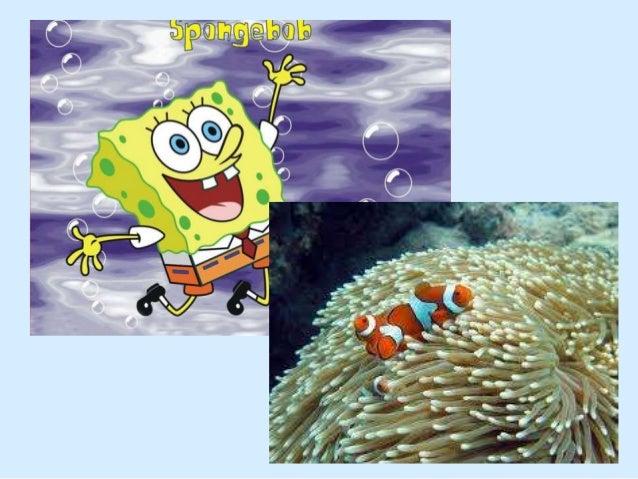 Recifes de Coral Recifes de Coral
