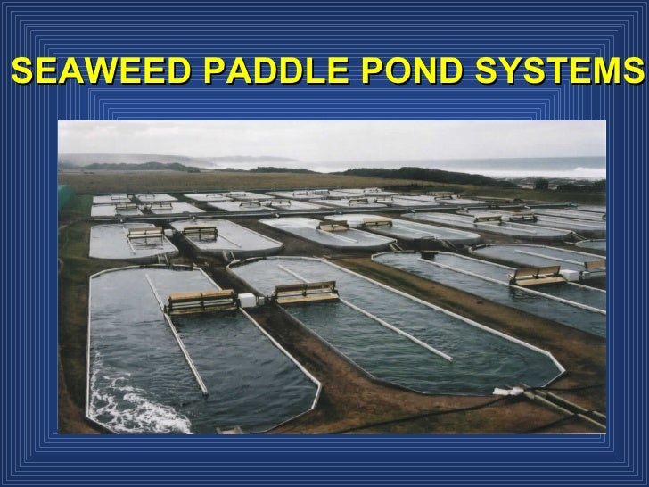 SEAWEED PADDLE POND SYSTEMS