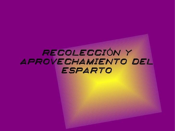 RECOLECCIÓN YAPROVECHAMIENTO DEL      ESPARTO