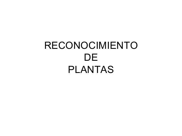 RECONOCIMIENTO DE PLANTAS