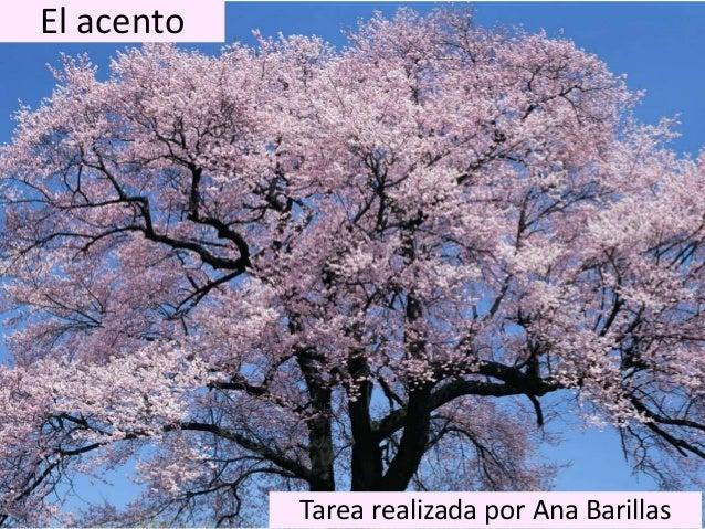 El acento Tarea realizada por Ana Barillas