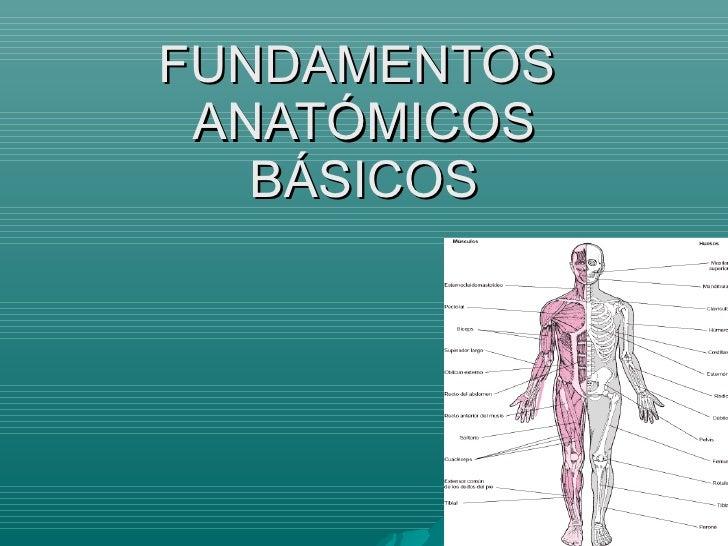 Recurso fundamentos anatomicos_basicos
