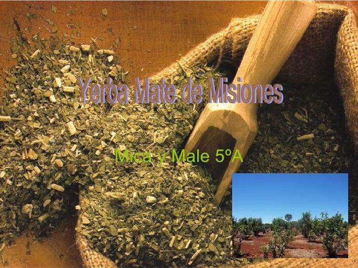 Mica y Male 5ºA Yerba Mate de Misiones