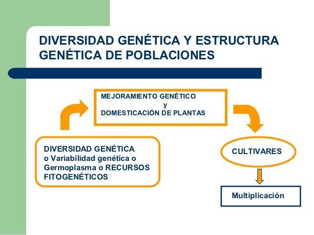 DIVERSIDAD GENÉTICA Y ESTRUCTURAGENÉTICA DE POBLACIONES             MEJORAMIENTO GENÉTICO                           y     ...