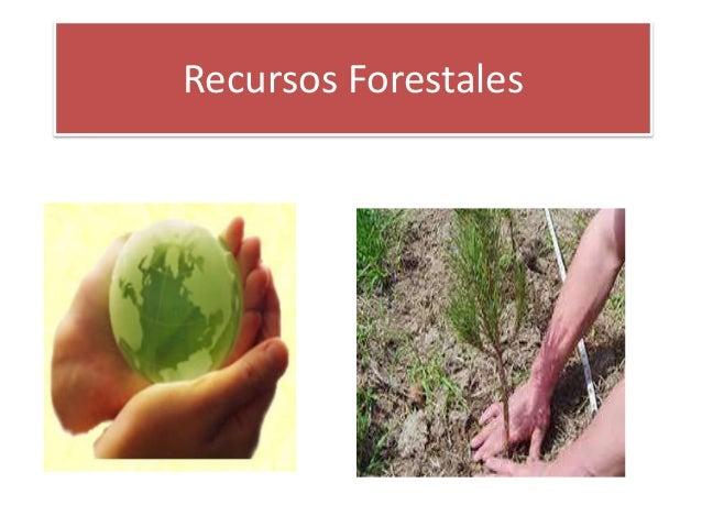 Recursos Forestales en República Dominicana