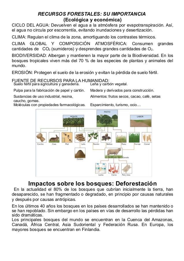 RECURSOS FORESTALES: SU IMPORTANCIA                      (Ecológica y económica)CICLO DEL AGUA: Devuelven el agua a la atm...
