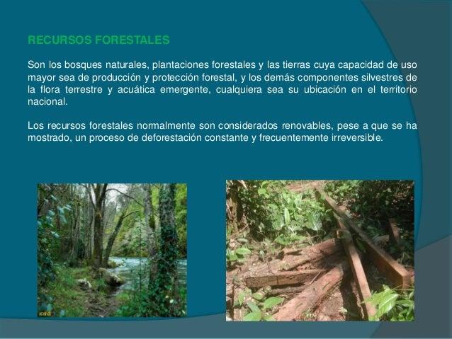 Recursos forestales obtencion de celulosa produccion de for Importancia de los viveros forestales