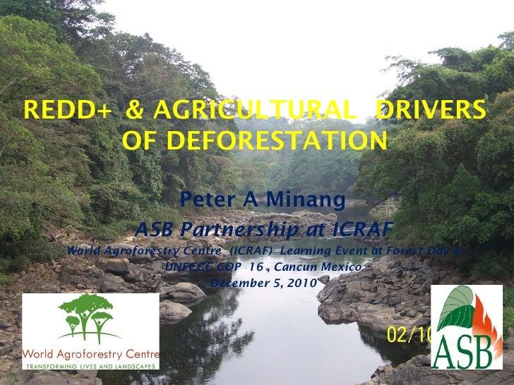 REDD+ & AGRICULTURAL DRIVERS      OF DEFORESTATION                    Peter A Minang             ASB Partnership at ICRAF ...