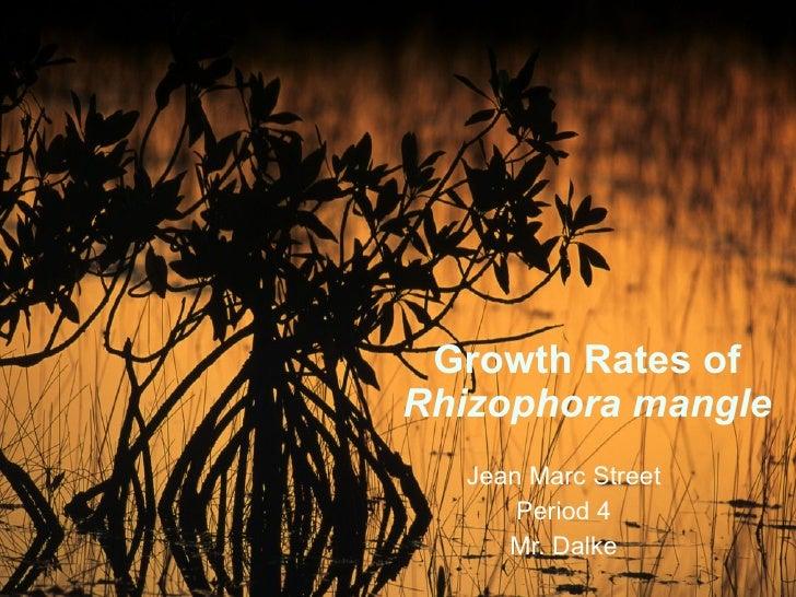 Growth Rates of  Rhizophora mangle Jean Marc Street Period 4 Mr. Dalke