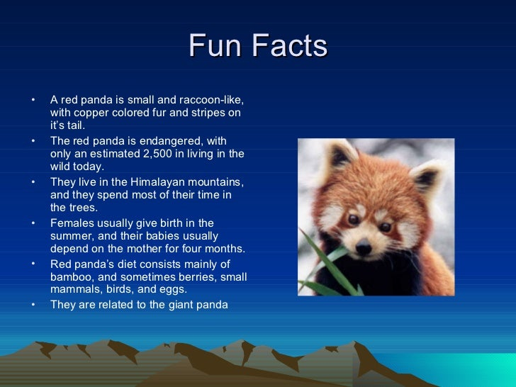 fun facts on red pandas habitat
