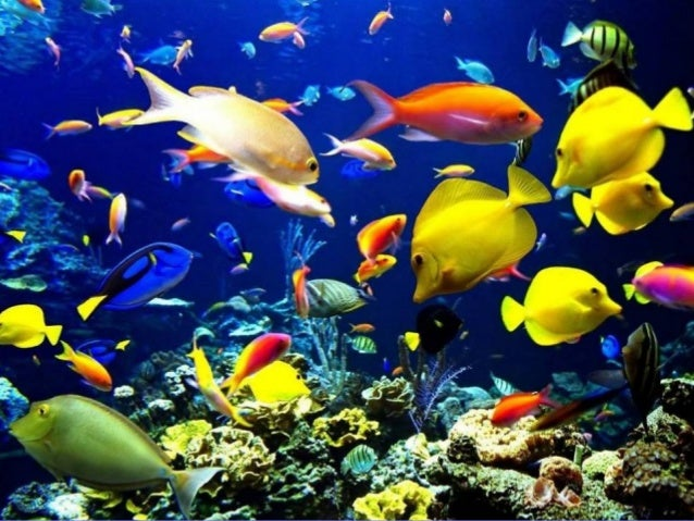 Red Sea Marine Life There are over 1100 species of fish (whereof about 40 are endemic). There are more than 200 species of...
