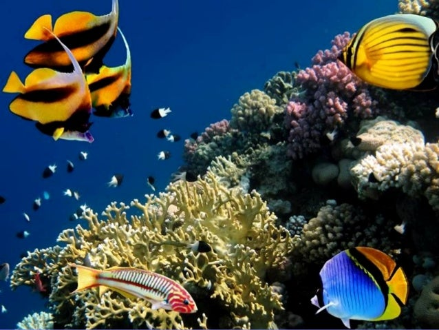 Red Sea Marine Life