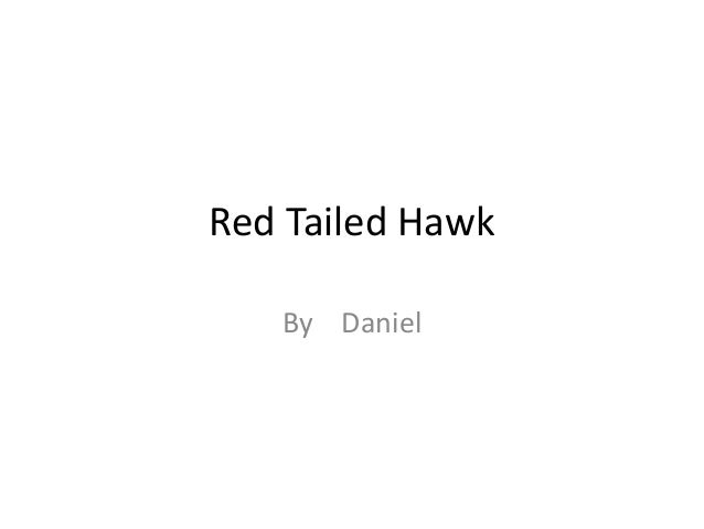Red Tailed Hawk By Daniel